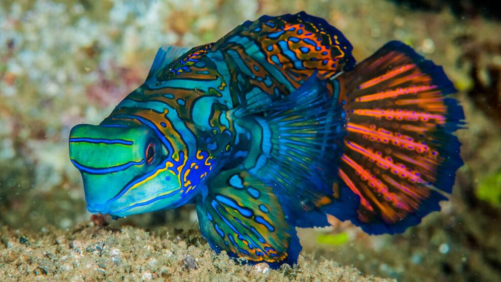Риби, които изглеждат като нарисувани