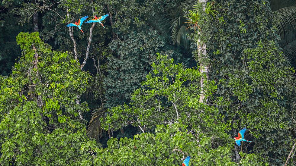 Красотата на Амазонската джунгла