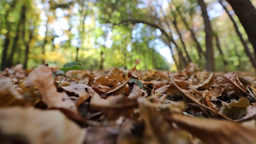 """Топла, златна есен в """"Северния парк"""" на столицата"""
