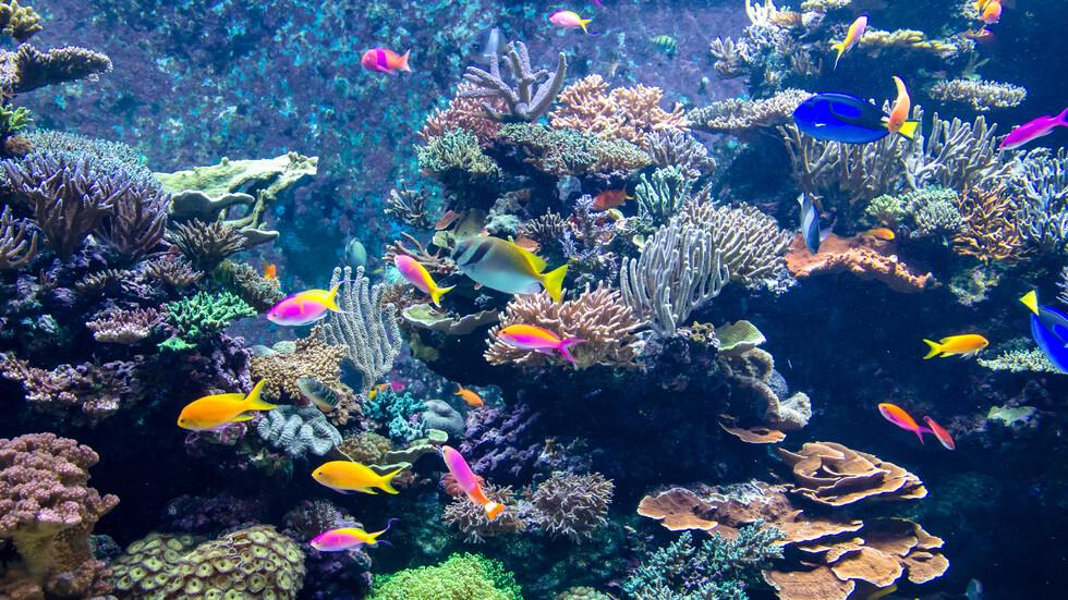 Какво ще изгуби човечеството, ако изчезнат кораловите рифове?