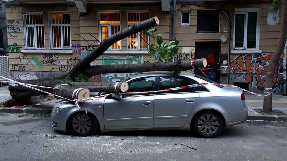 Дърво премаза кола в София