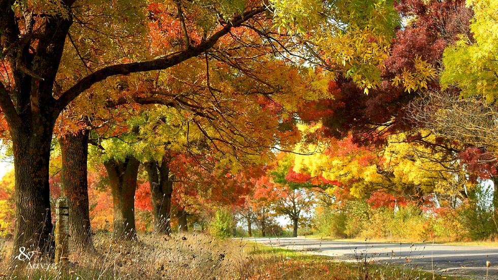 """""""Моята новина"""": Природата в есенна премяна"""