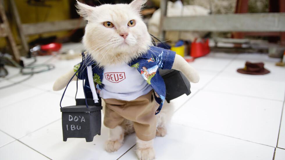 Модерни котки