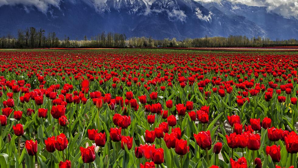 Най-впечатляващите градини по света