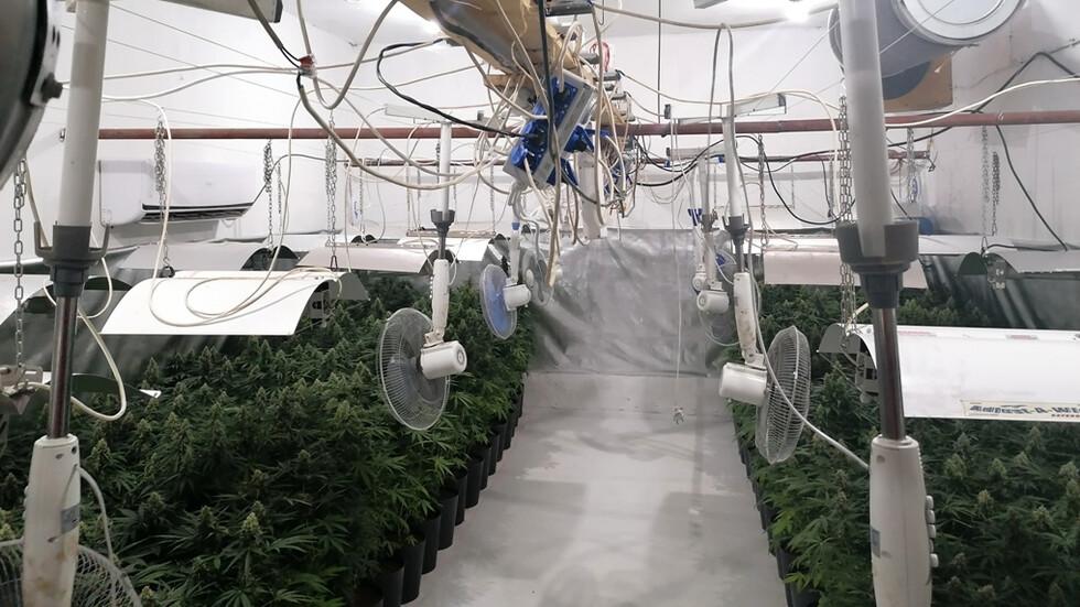 Разкриха високотехнологична наркооранжерия в Пазарджишко