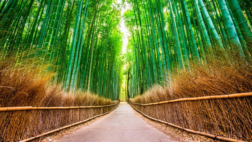 Непознатата Япония: Уникални места като от приказен сън