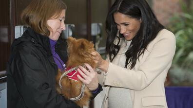 """Меган Маркъл посети благотворителната организация за животни """"Мейхю"""""""