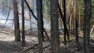 Пожар горя в Родопите
