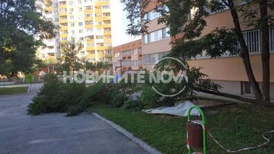 Вятър изкорени дървета в детска градина в София