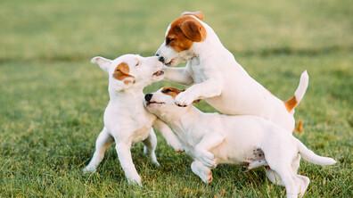 Породите кучета, за които се знае или малко, или нищо
