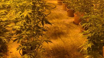 Разбиха огромна модерна нарколаборатория за марихуана
