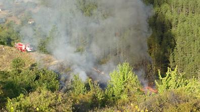 Пламна сметище край Благоевград, огънят стигна борова гора