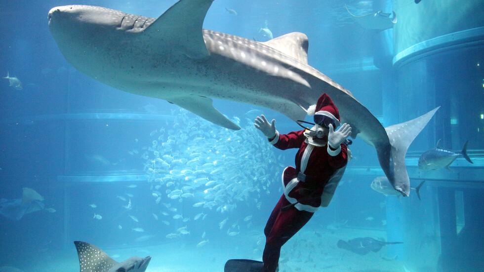 Дядо Коледа при китовете