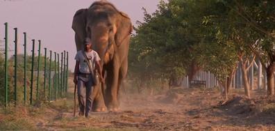 Първата болница за слонове и кой победи на Световната купа за бездомни