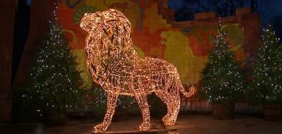 """""""Черният петък"""" и нова атракция в зоологическата градина в Лондон"""