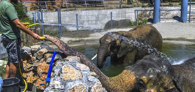 В зоологическата градина в Скопие отбелязват Деня на слона