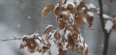 Първи снежен ден