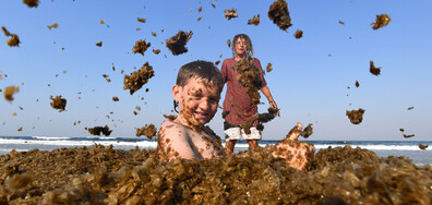 Водорасли затрупаха бреговете на Палм Бийч