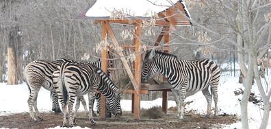 Студен зимен ден в Софийския зоопарк