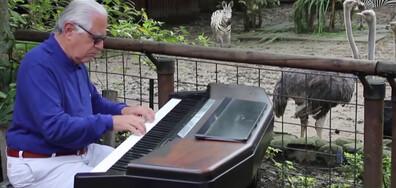 Пианист успокоява животните в зоопарк с класически мелодии