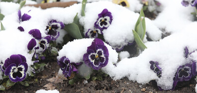 Снежна пролет в София