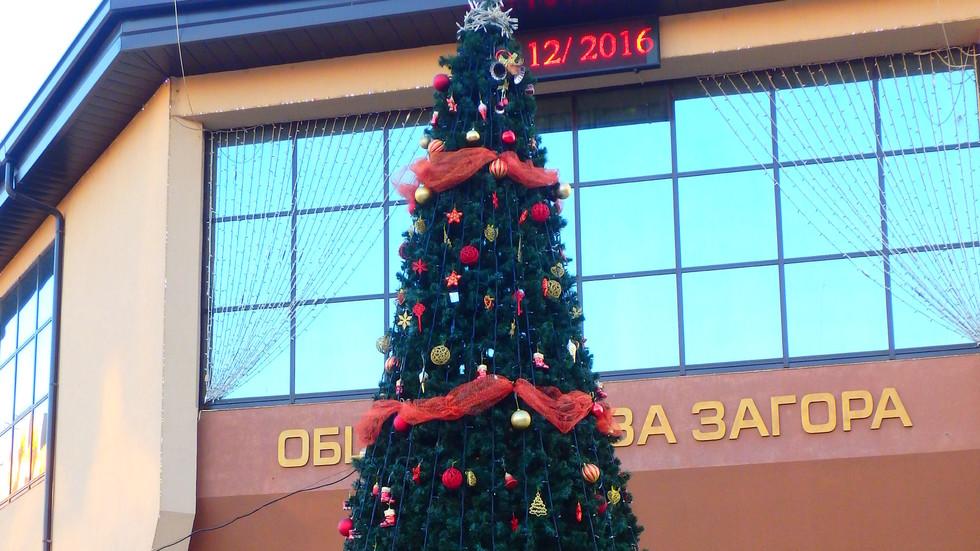 Градската елха