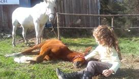 """Център за конна терапия помага на деца с увреждания на Конна база """"Хан Аспарух"""""""