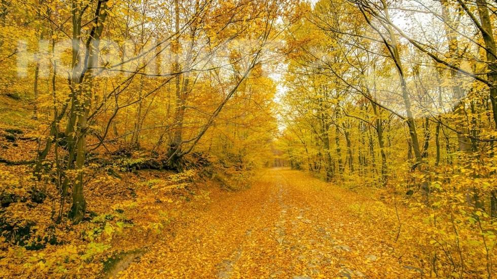 ЕСЕННА МАГИЯ: 20 доказателства, че есента е най-цветния сезон (ГАЛЕРИЯ)